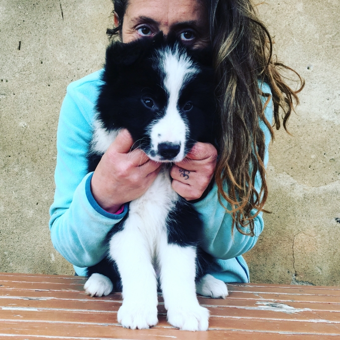 - BORDER COLLIE e AMSTAFF